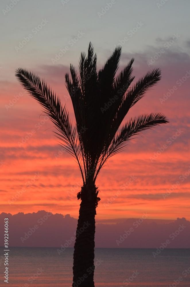Fototapeta  Red Sea in Egypt Sharm El Sheikh at sunrise