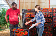 Woman Greenhouse Owner Working With Papers In Vegetable Warehouse While African American Worker Stacking Crates With Freshly Picked Tomatoes During Harvest..