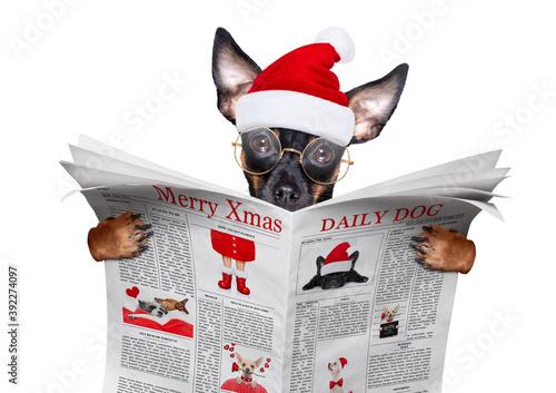 merry christmas dog  santa claus hat