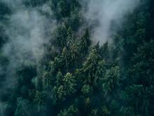 Fichtenwald Von Oben In Wolken...