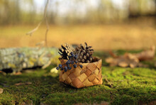 Basket With Pine Cones