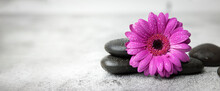 Black Stones And Purple Flower On White Marble Background. Beauty Treatment Concept. Banner Copy Space