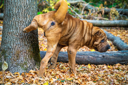 Photo A dog urinating on a tree