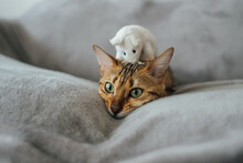Cat On Sofa With Mouse On Head