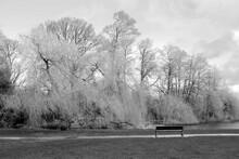 Trees In Park In Winter