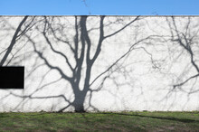 White Wall With Shadow Of Bare Tree