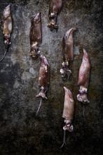 Squids On Dark Metal Surface