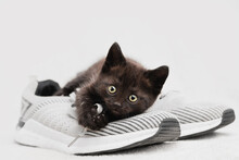 Portrait Of A Dark-colored Kitten Sitting On A Shoe Look Into The Camera