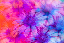 Daisies Photographed Through P...