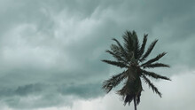 Palm Tree During Storm