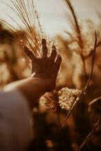 Hand Holding Nature.