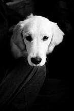 Black And White Dog With Sad Eyes