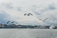 Seagulls In Helsinki