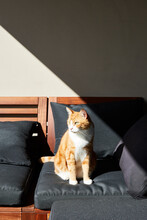 Ginger Pet Cat On Stylish Home...