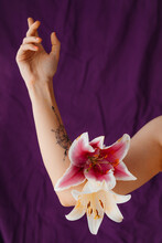 Arm With Tattoo And Hand With White And Pink Lilies On A Dark Purple Background