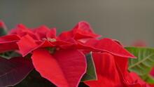 Fiori, Margherite, Stelle Di Natale, Roselline, Rose, Orchidee