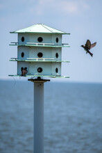 Bird About To Land On Birdhouse With Water In The Background In Southern Alabama.