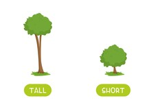 TALL And SHORT Antonyms Word Card Vector Template. Flashcard For English Language Learning. Opposites Concept. Big Tree And A Small Bush