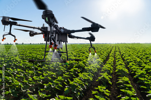Fototapeta Drone sprayer flies over the agricultural field