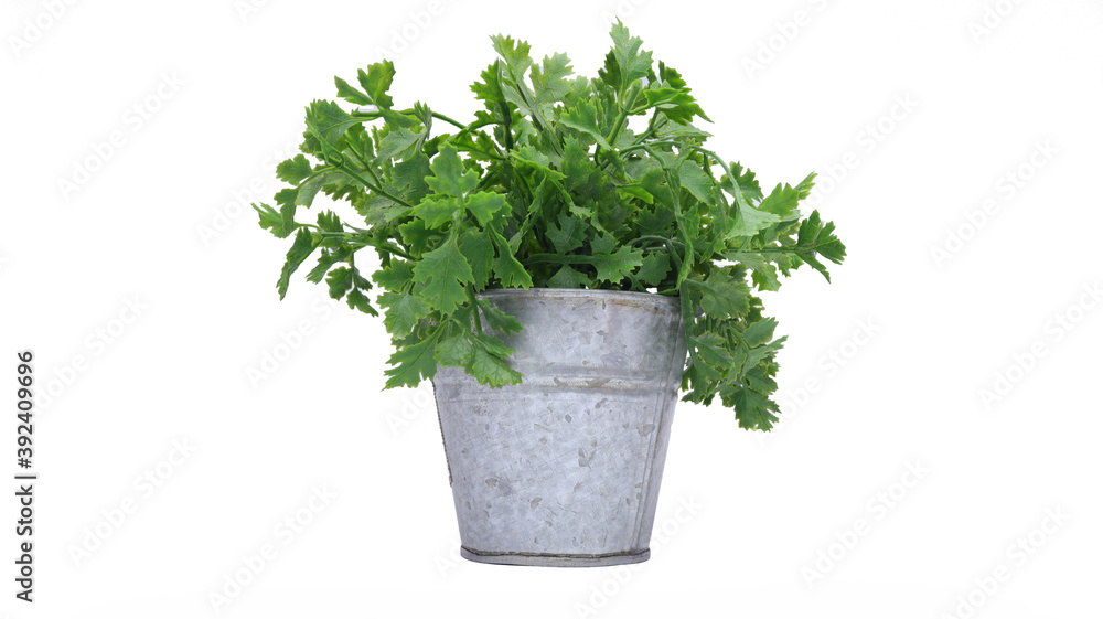 Fototapeta Green plant with pot in isolated white background