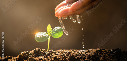 Earth day concept. Drop water on hand for growing tree. Protect the environment. Renewable energy for future. Global warming concept. Sustainable resources. For web banner