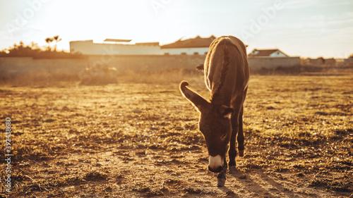 Chica joven andaluza ecuestre montando sobre caballo marron en un campo natural Canvas