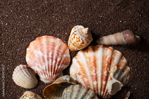 Foto Summer concept with sea shells on sand