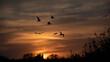 Grupa ptaków na tle nieba w zachodzącym słońcu