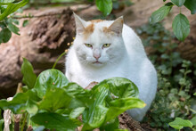 Domestic Cat With Green Plant Leaves Outdoors