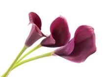 Three Purple Calla Lilies On G...