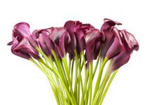 Flower Bunch, Many Beauty Purp...
