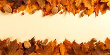 Orange Autumn Leaves Make Fram...
