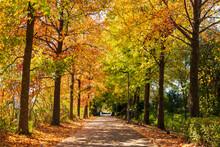 郊外の住宅地 紅葉の並木道