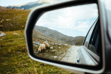 Look On The Car Mirror On The Sheep Grazing By The Gravel Road Of Mt. Bjelasnica, Bosnia And Herzegovina