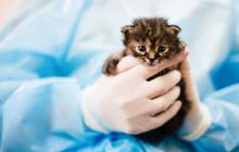 Tiny Newborn Kittens In The Arms Of The Veterinarian