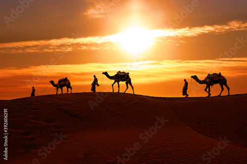 Fotografie, Obraz Cameleers, camel Drivers at sunset