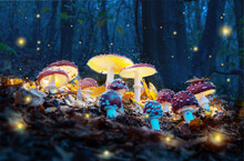 Mystical Fly Agarics Glow In A Mysterious Dark Forest. Fairytale Background For Halloween.