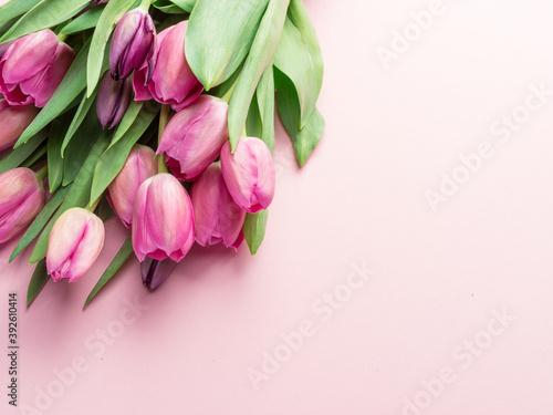 Fototapeta Bouquet pink tulips on lightpink background.