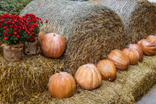 Pumpkin Orange Lying On The Bales Of Hay And The Flowers Are Red.