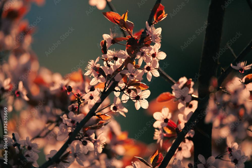 Fototapeta Spring is coming