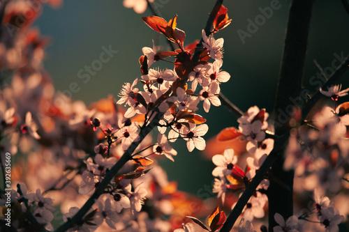 Fototapeta Spring is coming obraz