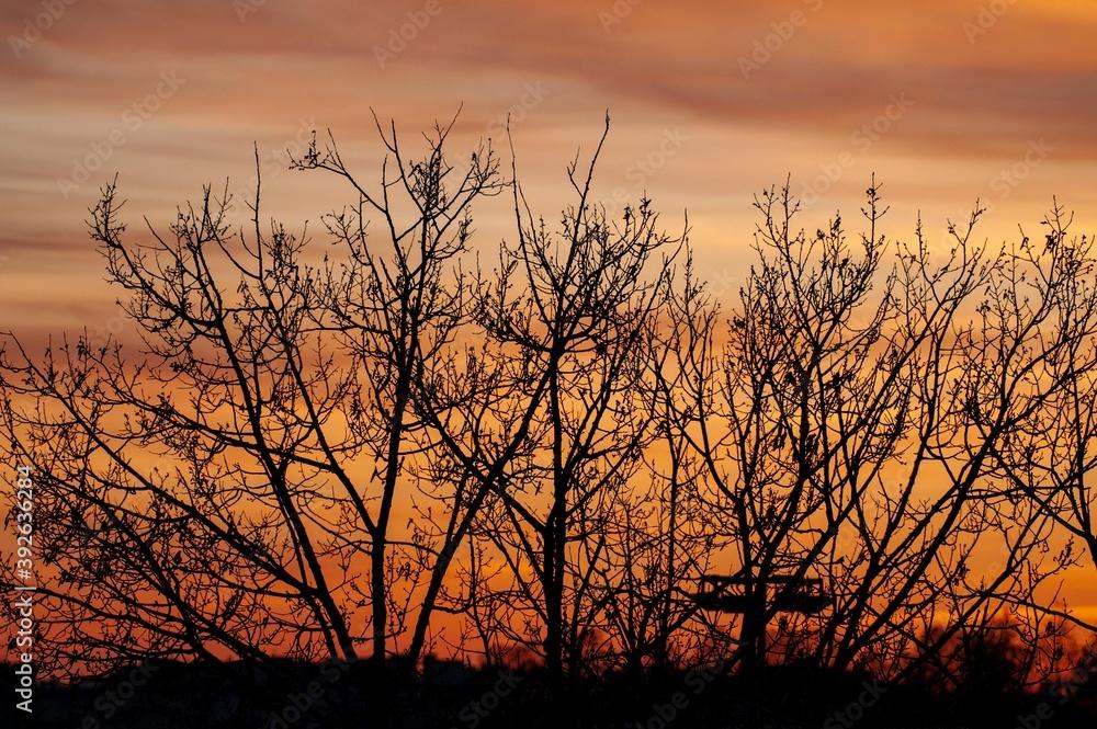 Fototapeta Sunset
