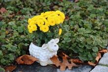 Dekoration Mit Gelben Blumen Im Blumentopf Als Schaf Im Herbst