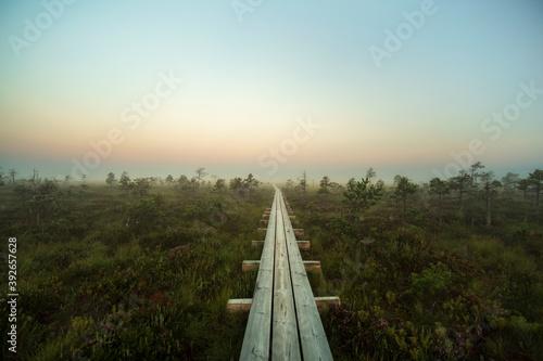 Tela wooden road through the swamp