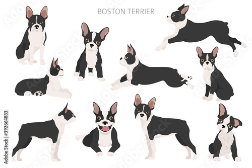 Stampa su Tela Boston terrier clipart