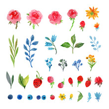 Floral Watercolor Collection W...