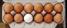 Close-up High Angle View Of A Carton With A Dozen Eggs, All Brown Except One White Egg