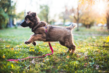 Puppy Running In The Autumn Park