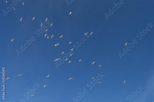 Papel de parede Aves en el cielo