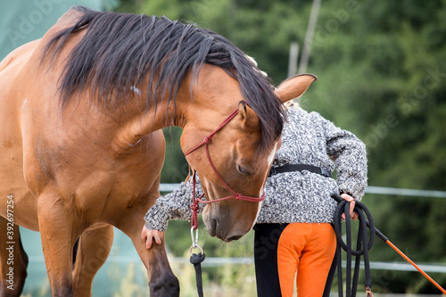 Fotografia horse and rider training in the field - work from the ground - rope -exercises w